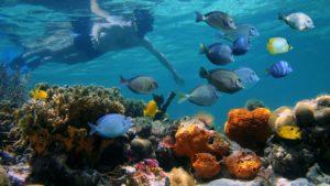 Puerto Viejo Costa Rica Local Tours - Cahuita snorkeling