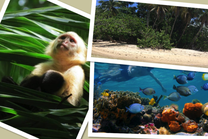 Cahuita snorkeling & hiking tour